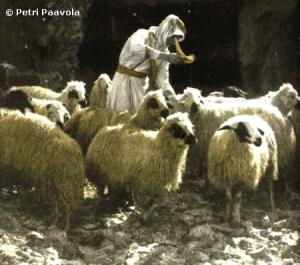 shepherdsheepanointing