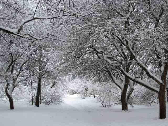 Lumipuutarha