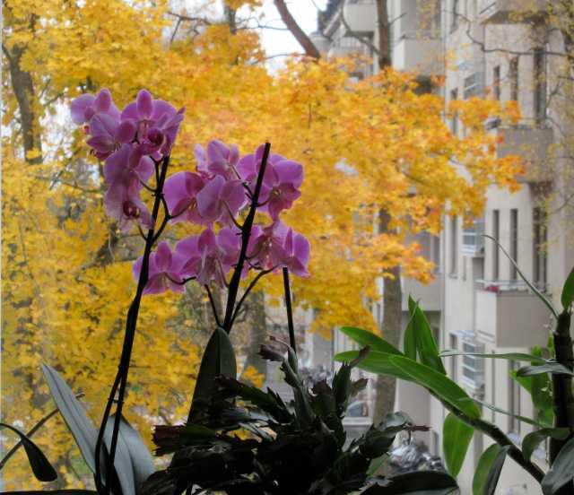orkidea2